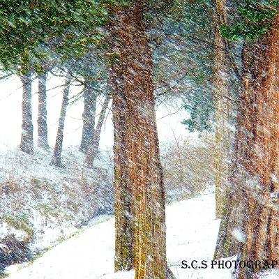 """Timeless Snowfall"""